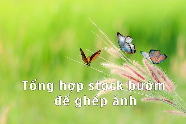 Tổng hợp stock bươm bướm ghép ảnh trong photoshop