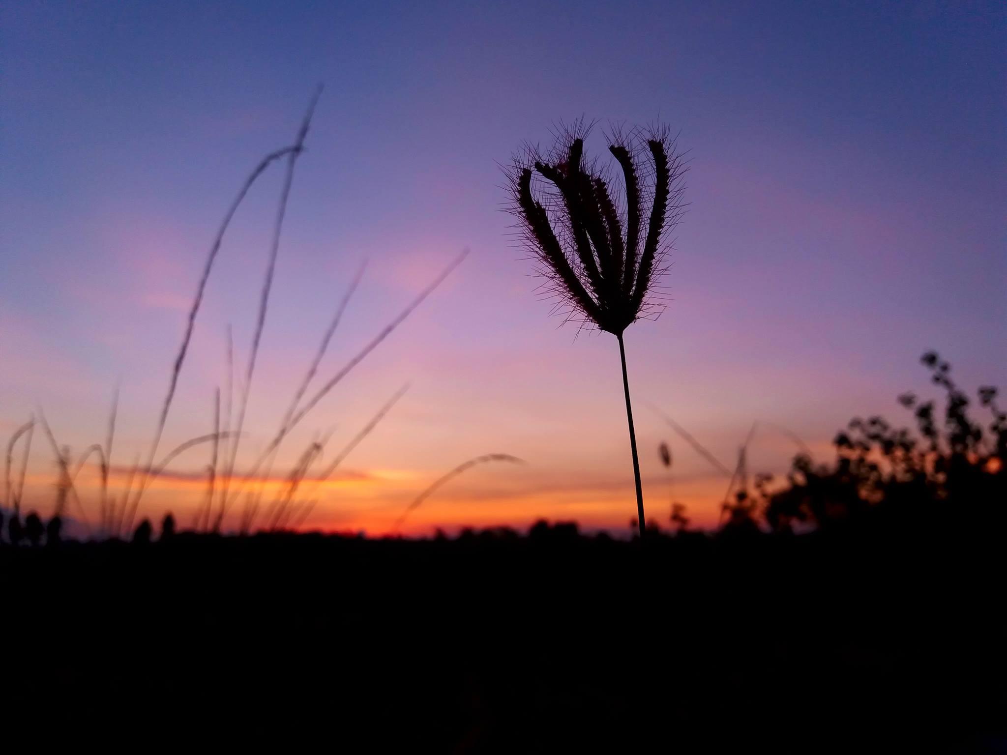 Các hình ảnh đẹp chụp từ điện thoại samsung