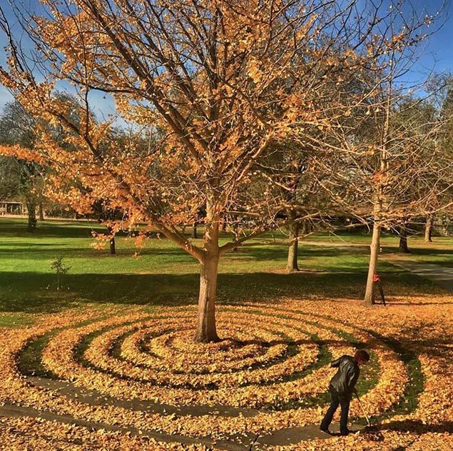Khi mùa thu đến, thời tiết trở nên lạnh hơn, gió nhiều hơn khiến hàng ngàn chiếc lá rơi xuống đất