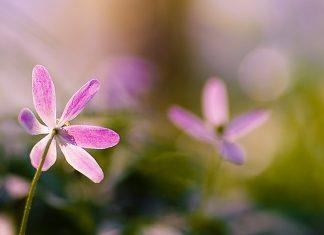 Mách bạn cách chụp ảnh hoa siêu ảo diệu và lung linh