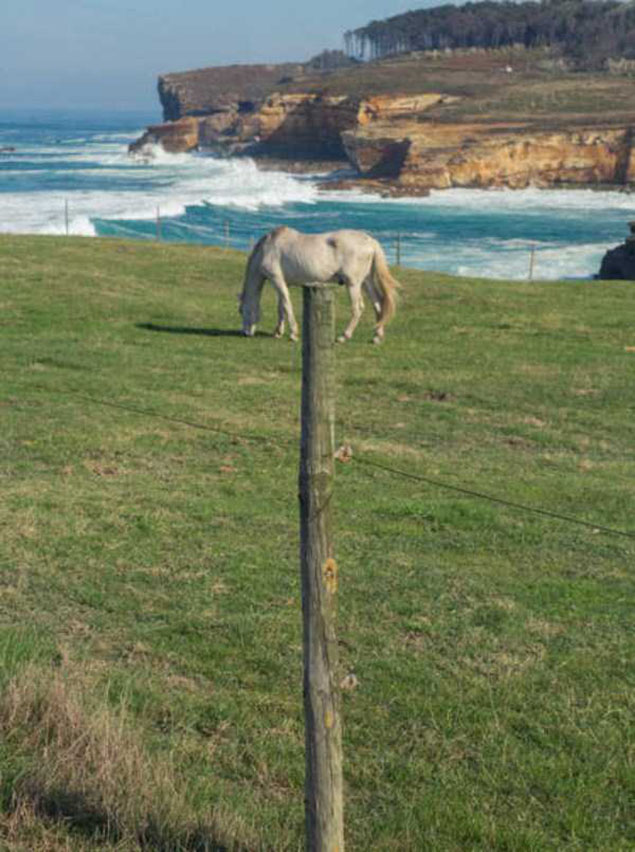 Phải chăng đây là một cái tò he hình con ngựa?