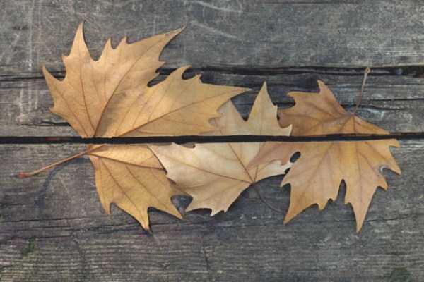 Những chiếc lá được ghép lại và trùng khớp một cách thần kì