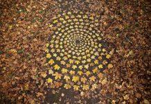 Khi những chiếc lá vàng rơi trở thành những tác phẩm nghệ thuật