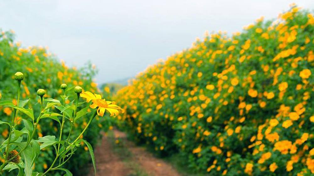 Cung đường vào làng hoa Vạn Thành – Tà Nung – Thác Voi