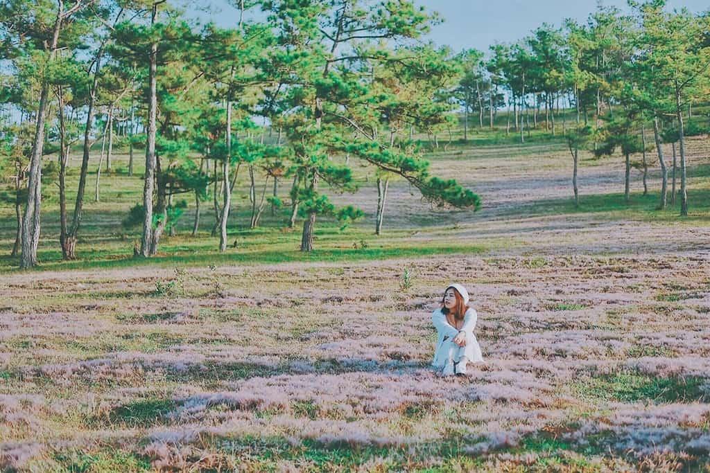Đồi cỏ Hồng đẹp lung linh