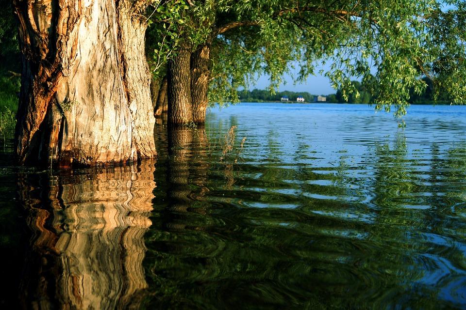 Có một thế giới khác dưới nước chăng?