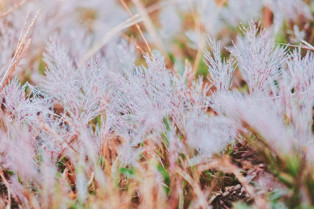 Với những giọt sương đọng trên cánh hoa