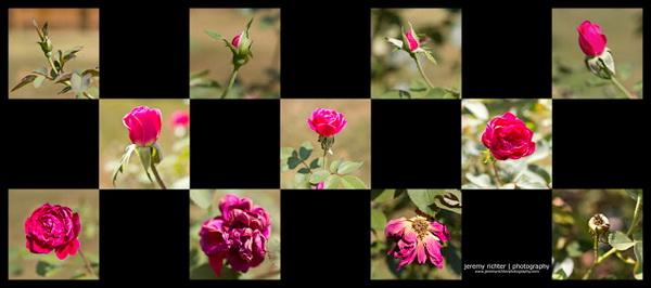 Thể hiện được vòng đời của hoa