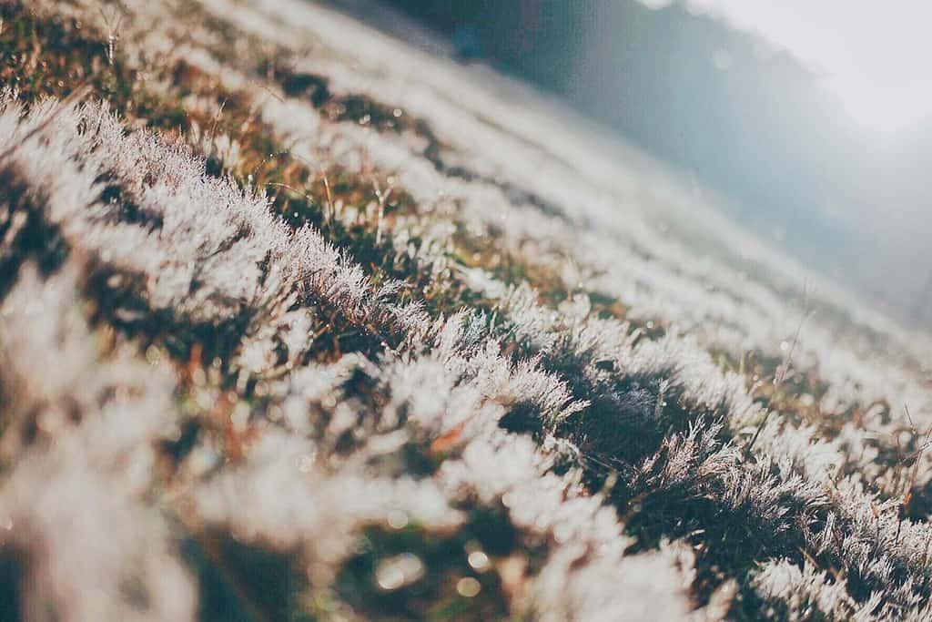 Đường đi vào khu vực Đồi cỏ hồng khu vực Cây thông cô đơn