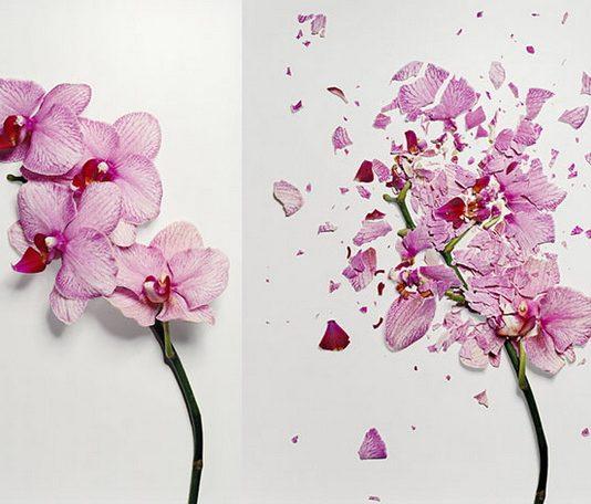 Những tips nhiếp ảnh gia cần nắm rõ để có được một bức ảnh hoa lung linh huyền ảo