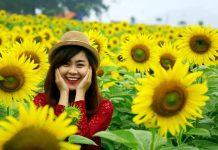Bí quyết chụp ảnh hoa hướng dương cho người mới bắt đầu học chụp ảnh