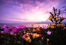Bỏ túi ngay 7 tips để chụp được những bức ảnh hoa lung linh và ảo diệu như ý muốn