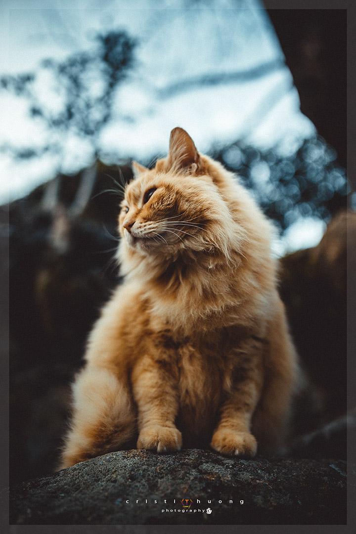 Ảnh chụp phong cách màu vintage đẹp
