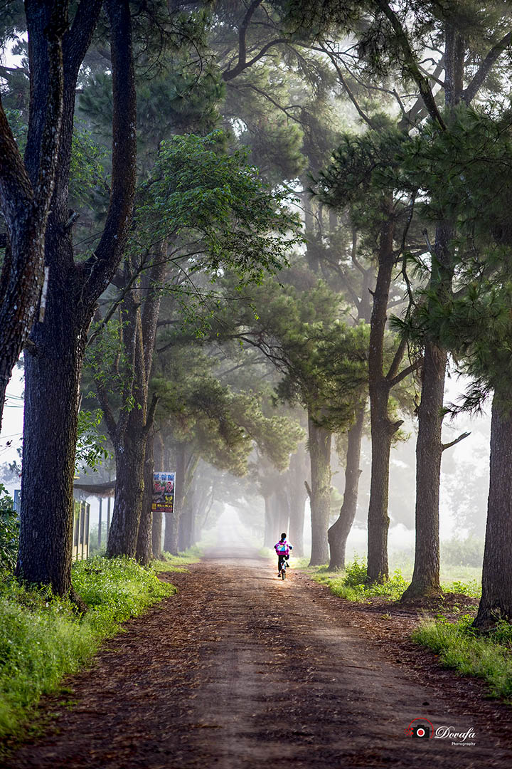 Ảnh chụp con đường quê đầy thơ mộng