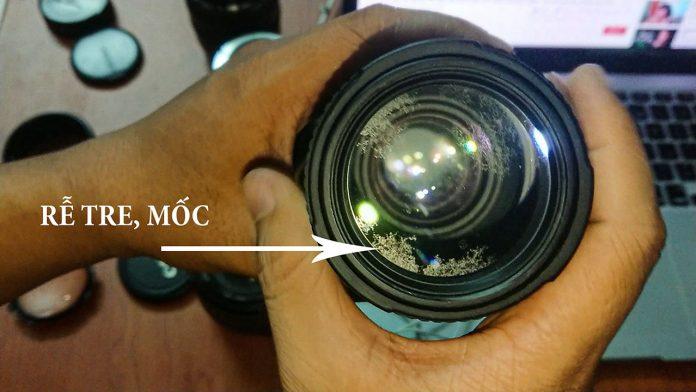 Lens bị mốc, rễ tre